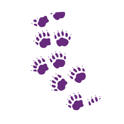 foot prints, paw prints, hoof prints, bear prints, animals